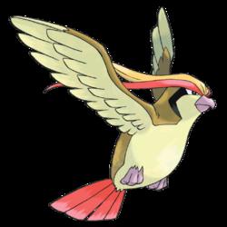 Pidgeot(Pigeot)