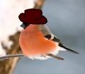 Снегирь в шляпе