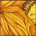Желтый барсук