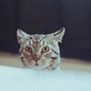 Bob_Cat & Co
