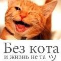 bez-kota