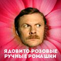 Ядовито-розовые ручные ромашки