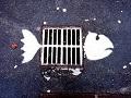 fish4l