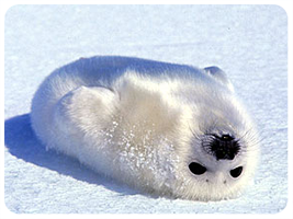 Cute Animal 05.