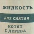 медовый барсук