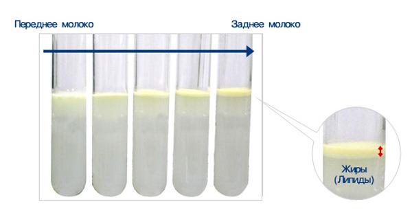 Как проверить жирность молока кормящей в домашних условиях
