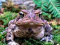 Жаба из болотца