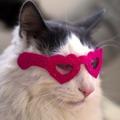 daily_kitten