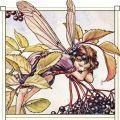 Gardenia Lis