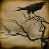 Lady_Crow