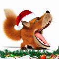 любопытная лисица