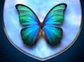 Синие дали