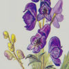Цветущий аконит