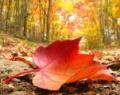 Осенний орг