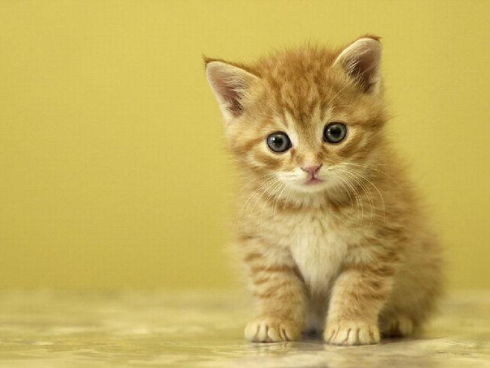 ...котята, котенок, кошки, кошка, кот.