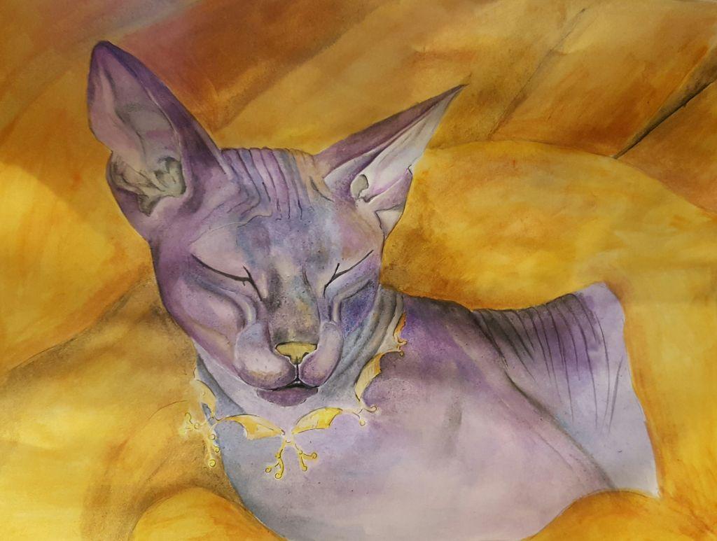 Кот сфинкс.