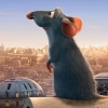 Random rat