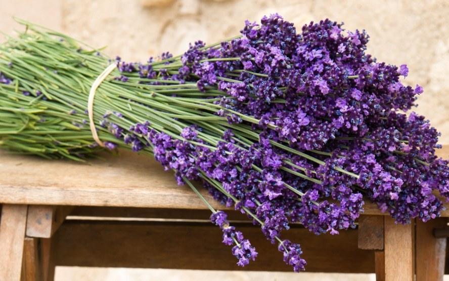 lavender socorro villanueva View free background profile for socorro c villanueva on mylifecom™ - phone | 31 st st address, los angeles, ca | 0 emails | photos | 3 profiles | 1 review & more.