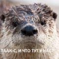 Otter-posh