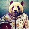сильная независимая панда