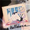 Hellebore_