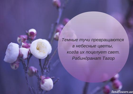 Цветы цитаты и афоризмы