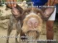 Собакин_ужас