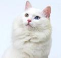 Minaka