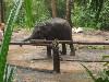 слоненок!!!!