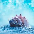 WTF Sea Adventures 2018