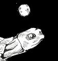 WTF Turtles 2018