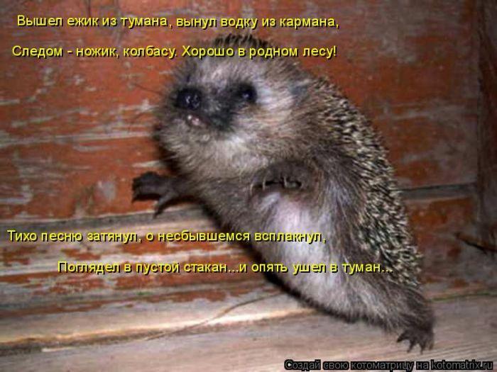 аватарки для контакта с животными: