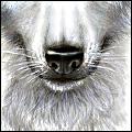 Волче