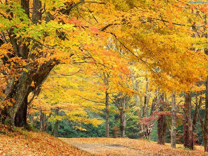 Темы листья осень природа