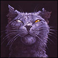 Гил, кот из подворотни