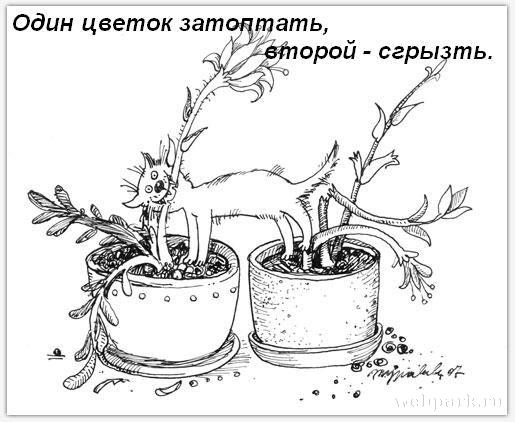 http://static.diary.ru/userdir/3/9/7/2/397265/64681110.jpg