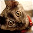 KittyH