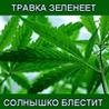 BEZenok