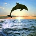 Delfinova