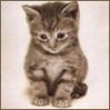 Super_Cat