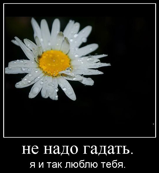 http://static.diary.ru/userdir/4/1/4/6/4146/44898067.jpg