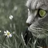 Katzie