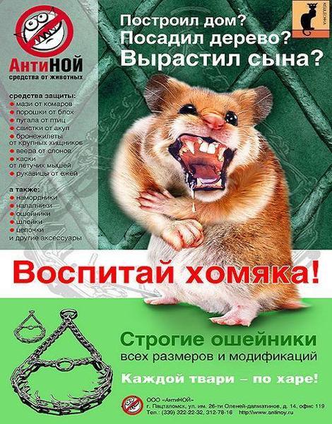 http://static.diary.ru/userdir/4/1/8/9/418948/65725824.jpg