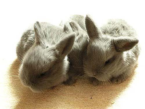 ...Потом мне купят кролика!УРА!Я очень рада ведь я начала мечтать о нём.