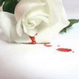 Bleeding_Rose