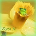 Zetta N.