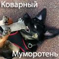 Katze_Xks