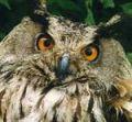 -Post Owl-