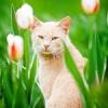 KittyCatie