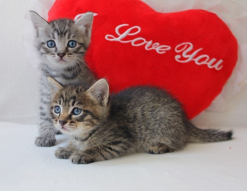 так картинки любимому от котенка могут